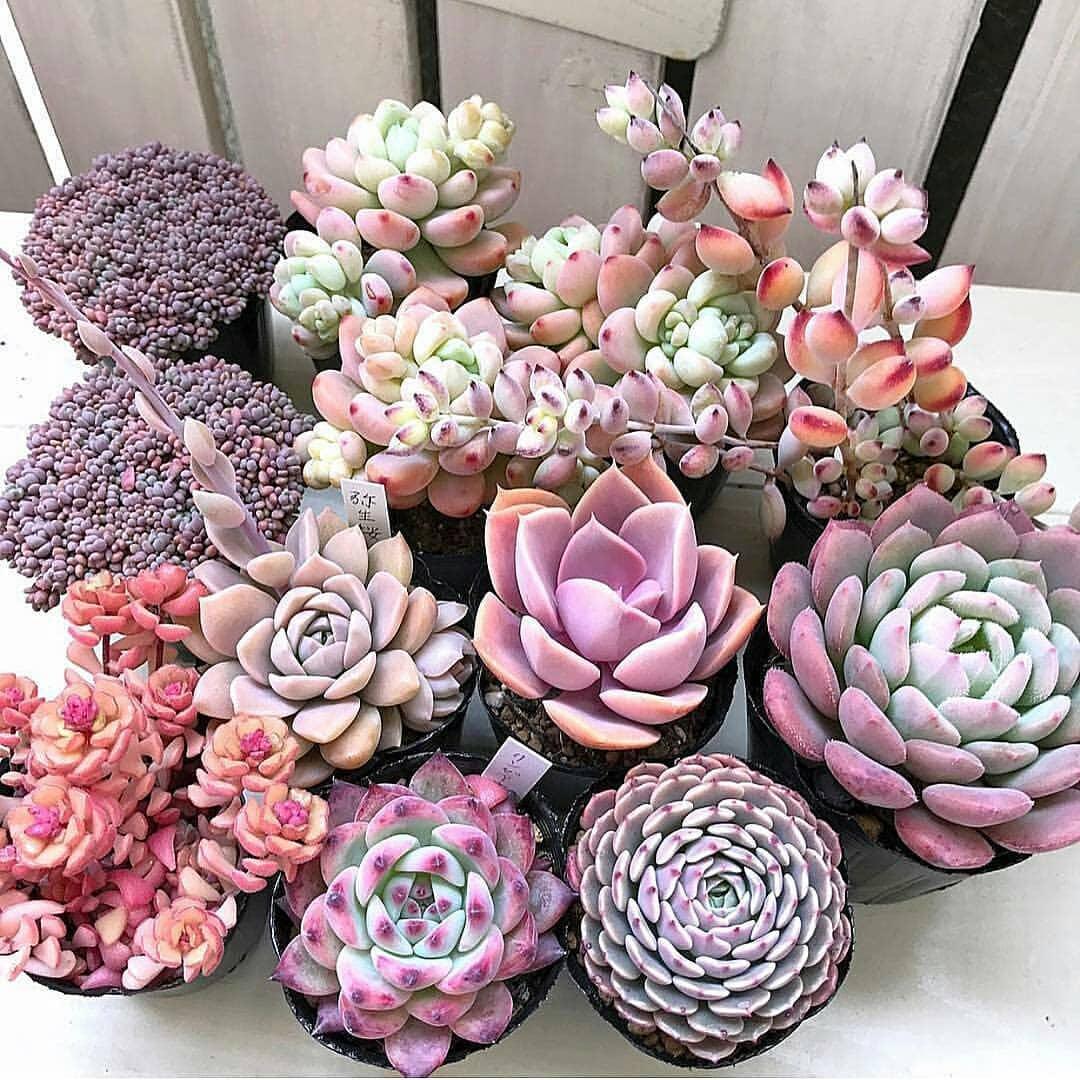 5 Kaktus Lucu Paling Ngetrend Tahun Ini