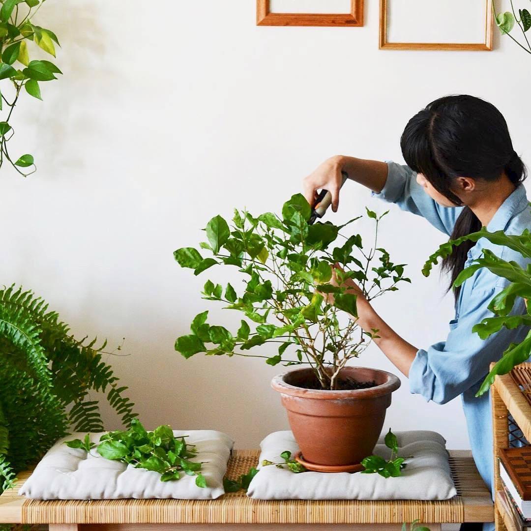 Begini 5 Cara Membuat Taman Sendiri